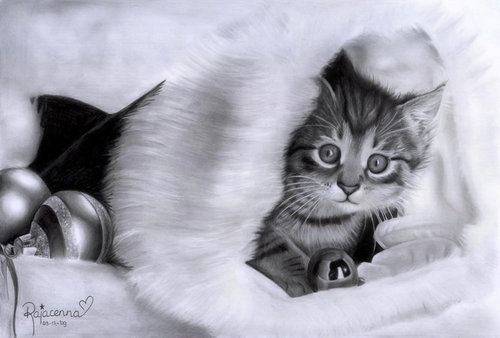 natal kucing