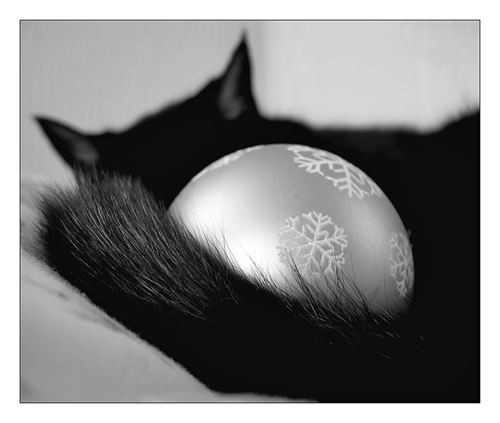 Krismas Kucing