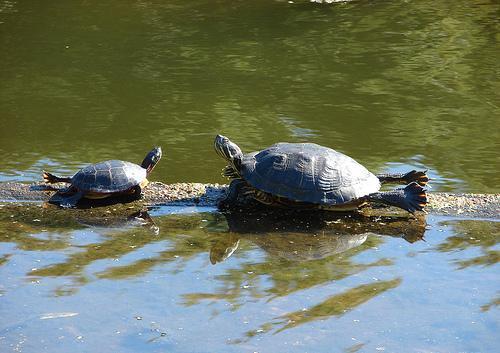 터틀, 거북 yoga