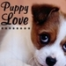 ♥ Dogs - dogs icon
