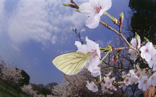 Beautiful 나비