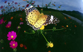 Beautiful Butterflies