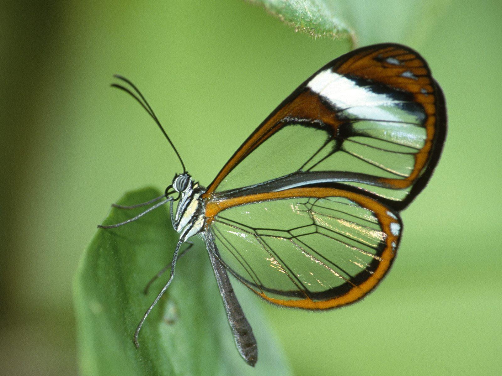 Beautiful 蝴蝶