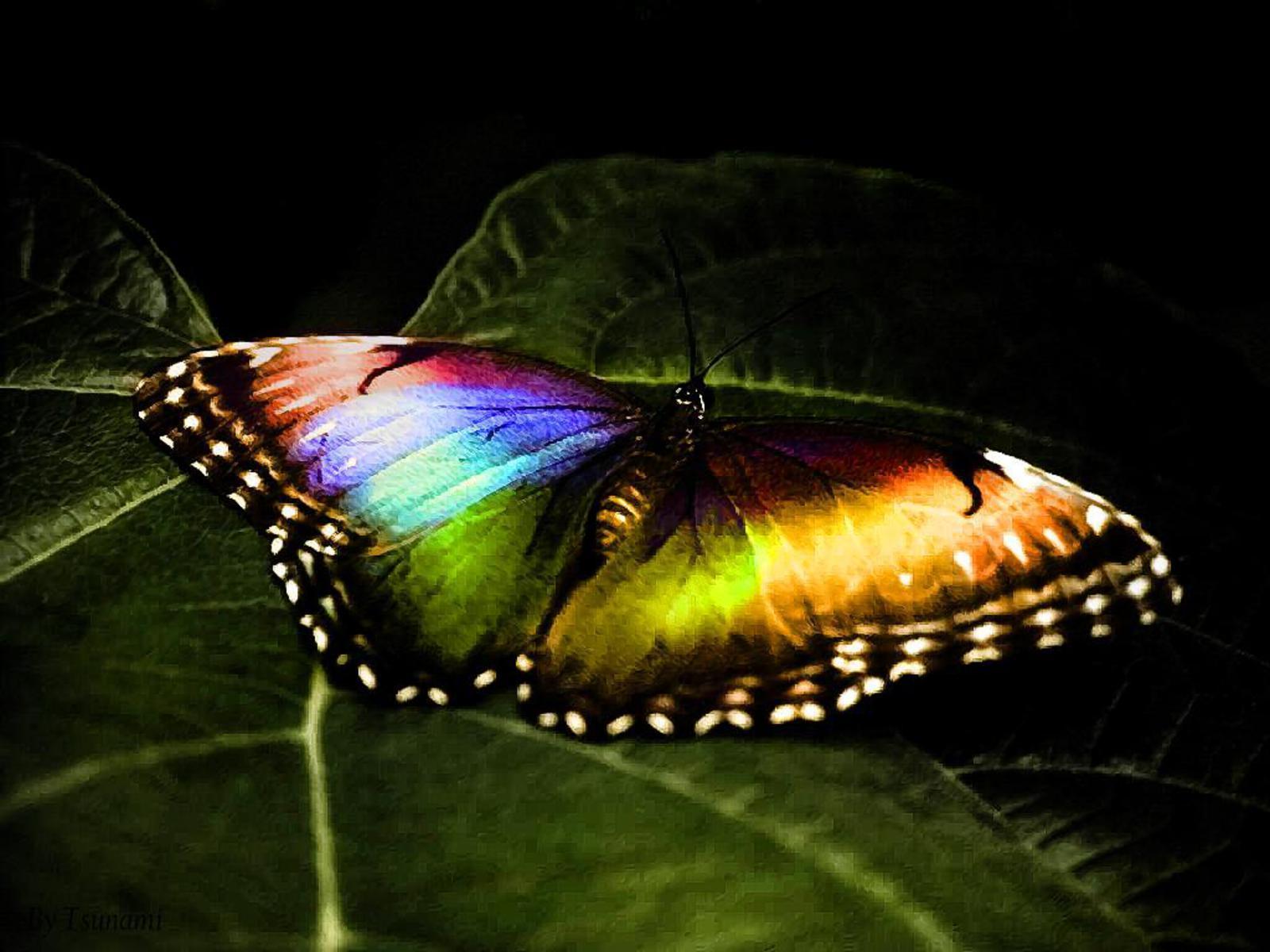 Beautiful Butterflies - Butterflies Wallpaper (9481689 ...