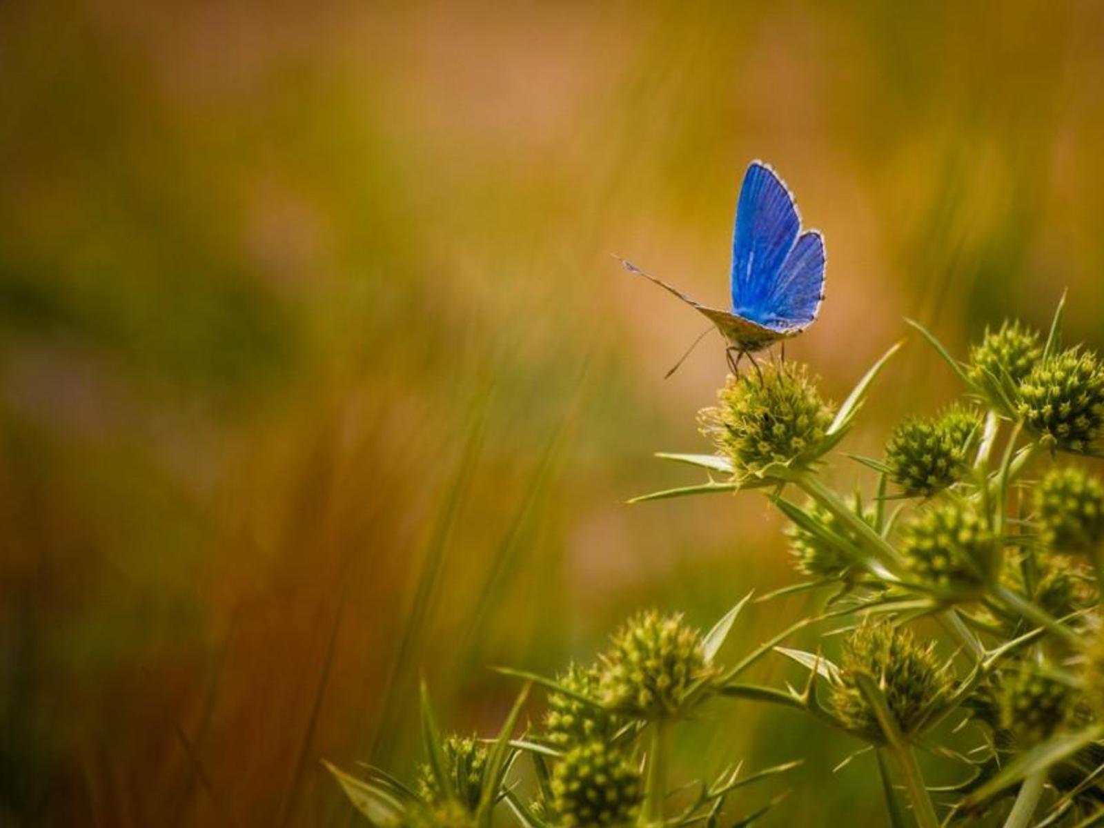 Beautiful तितलियों