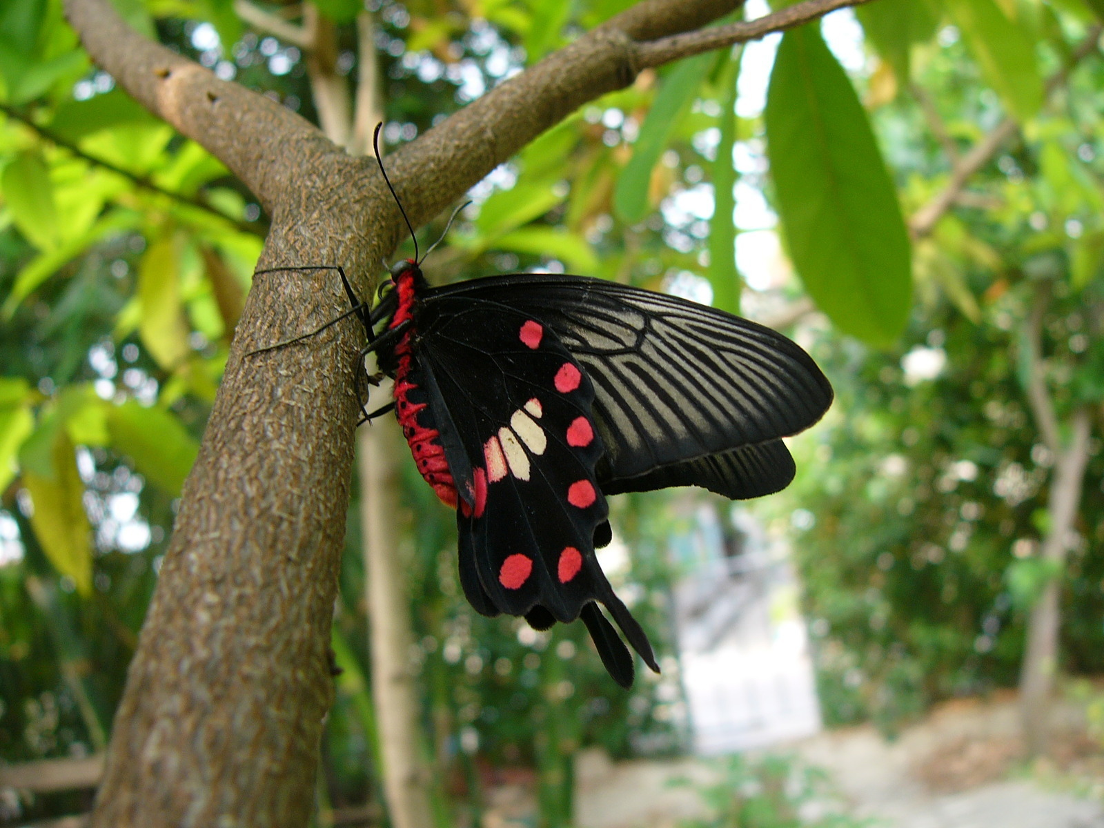Beautiful farfalle