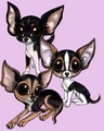 Cuties - chihuahuas fan art