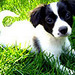 Dogs icons - dogs icon