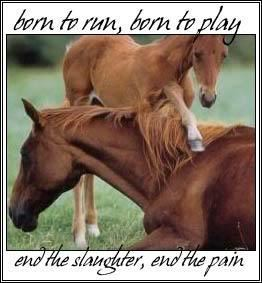 End Horse Slaughter !