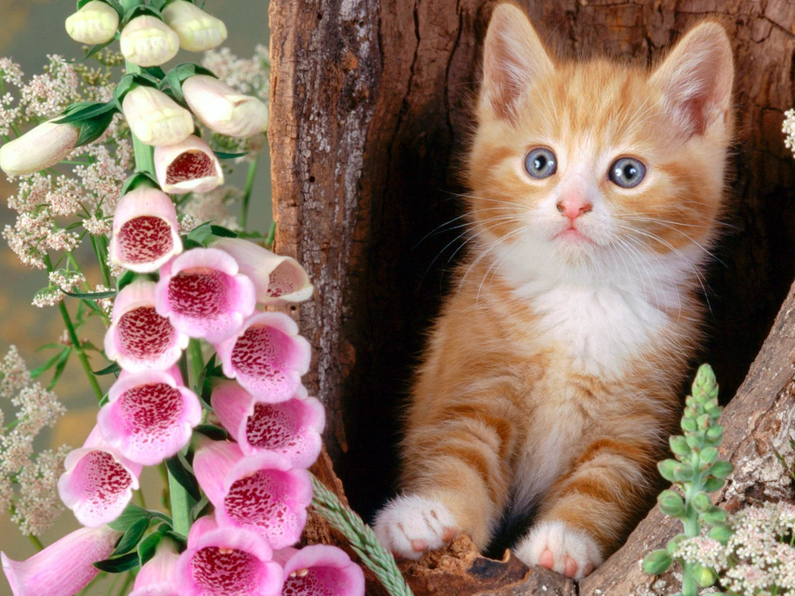 funny kittens wallpapers - photo #30