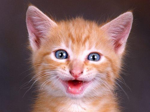 Funny mèo