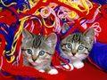 cats - Funny Cats wallpaper
