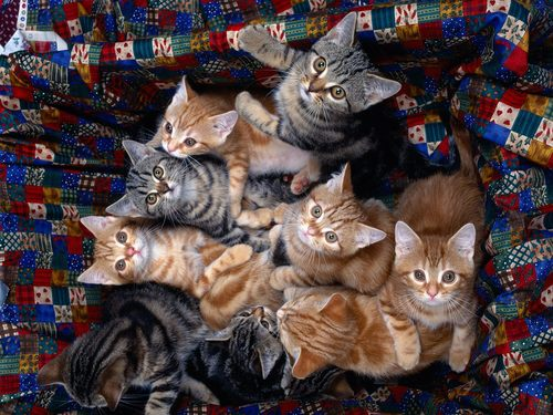 Cats wallpaper containing a tabby called Funny Cats