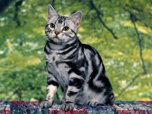 Funny Kucing
