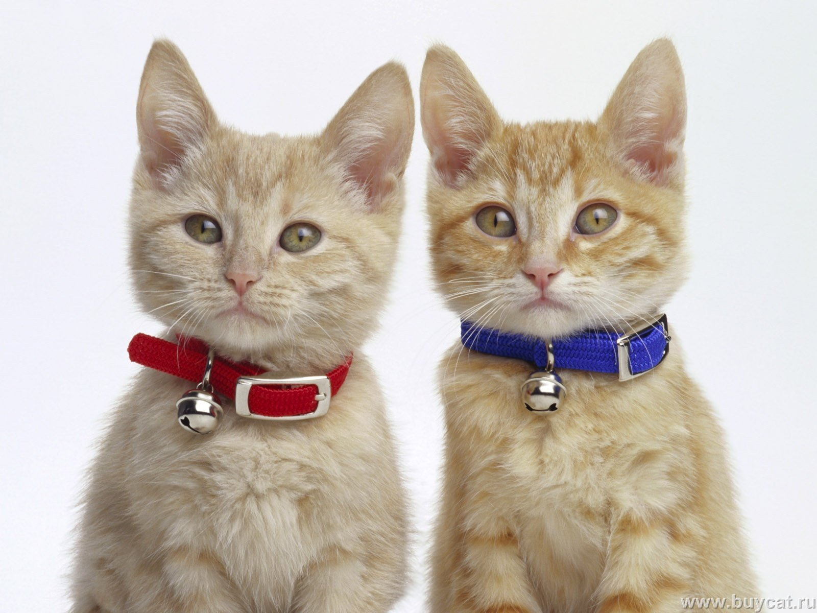 Funny Twin Cat Names