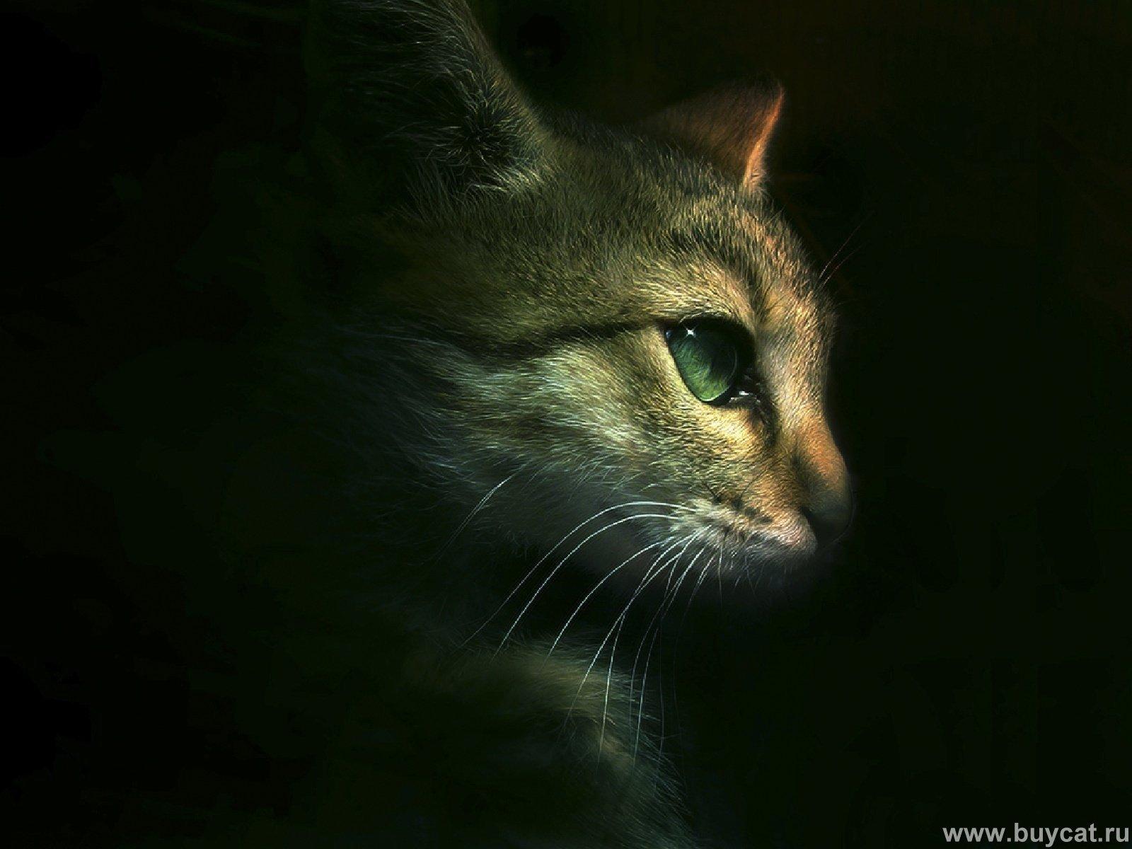 Funny Cats - Cats Wallpaper (9474183) - Fanpop