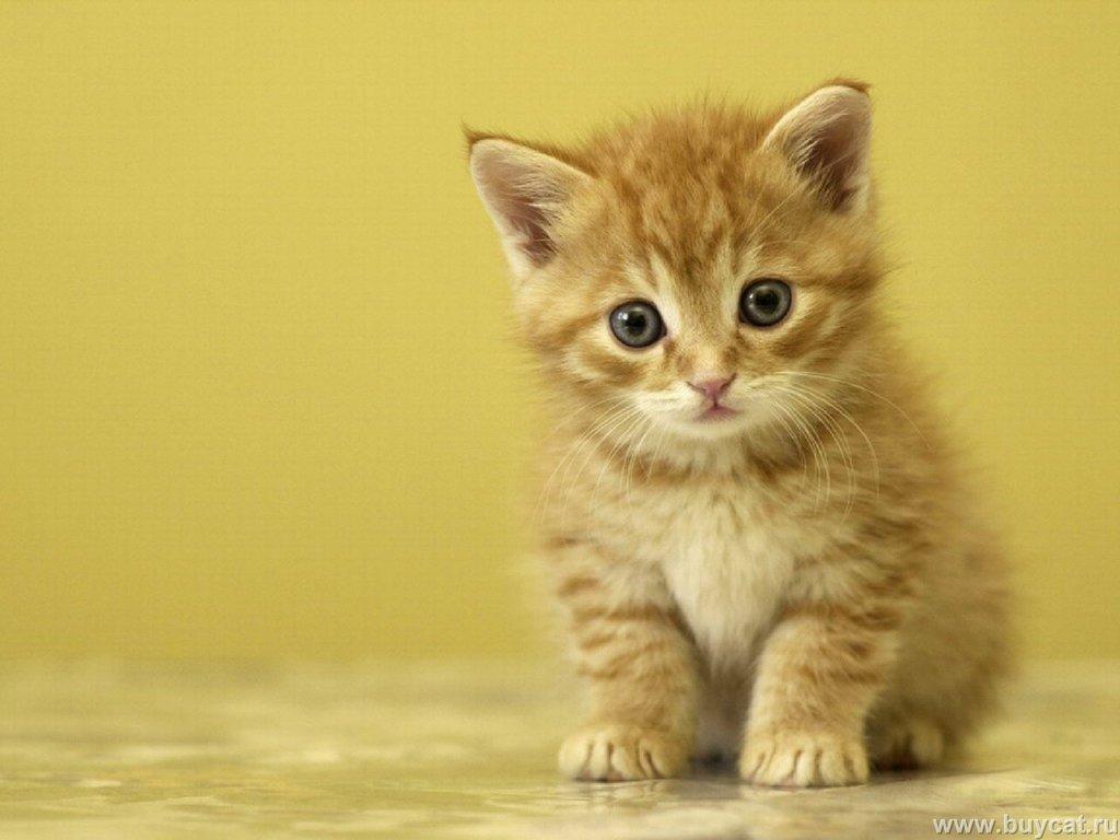 gambar foto kucing imut lucu