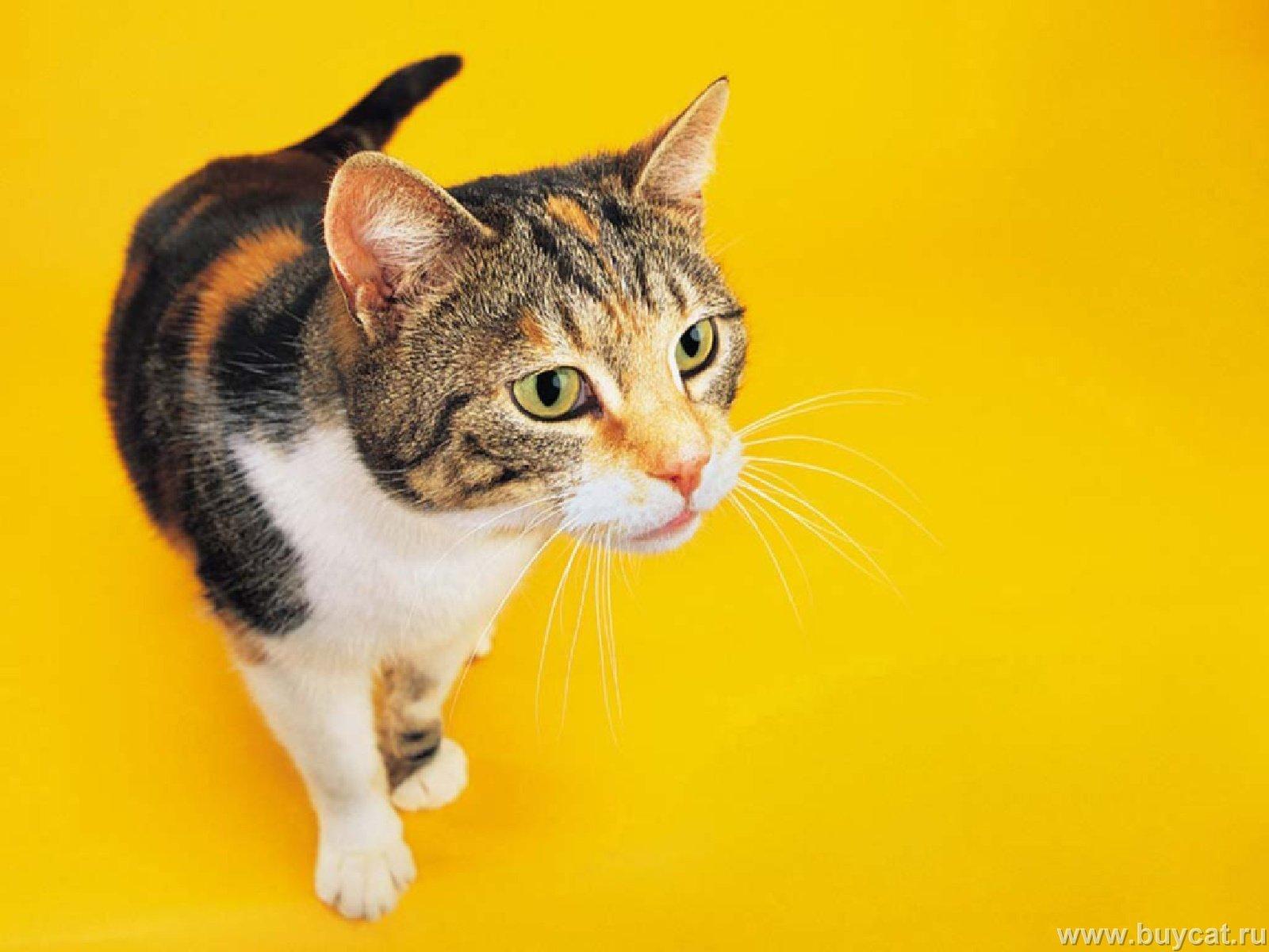 fun2draw 100 cats- cute winking cat meme