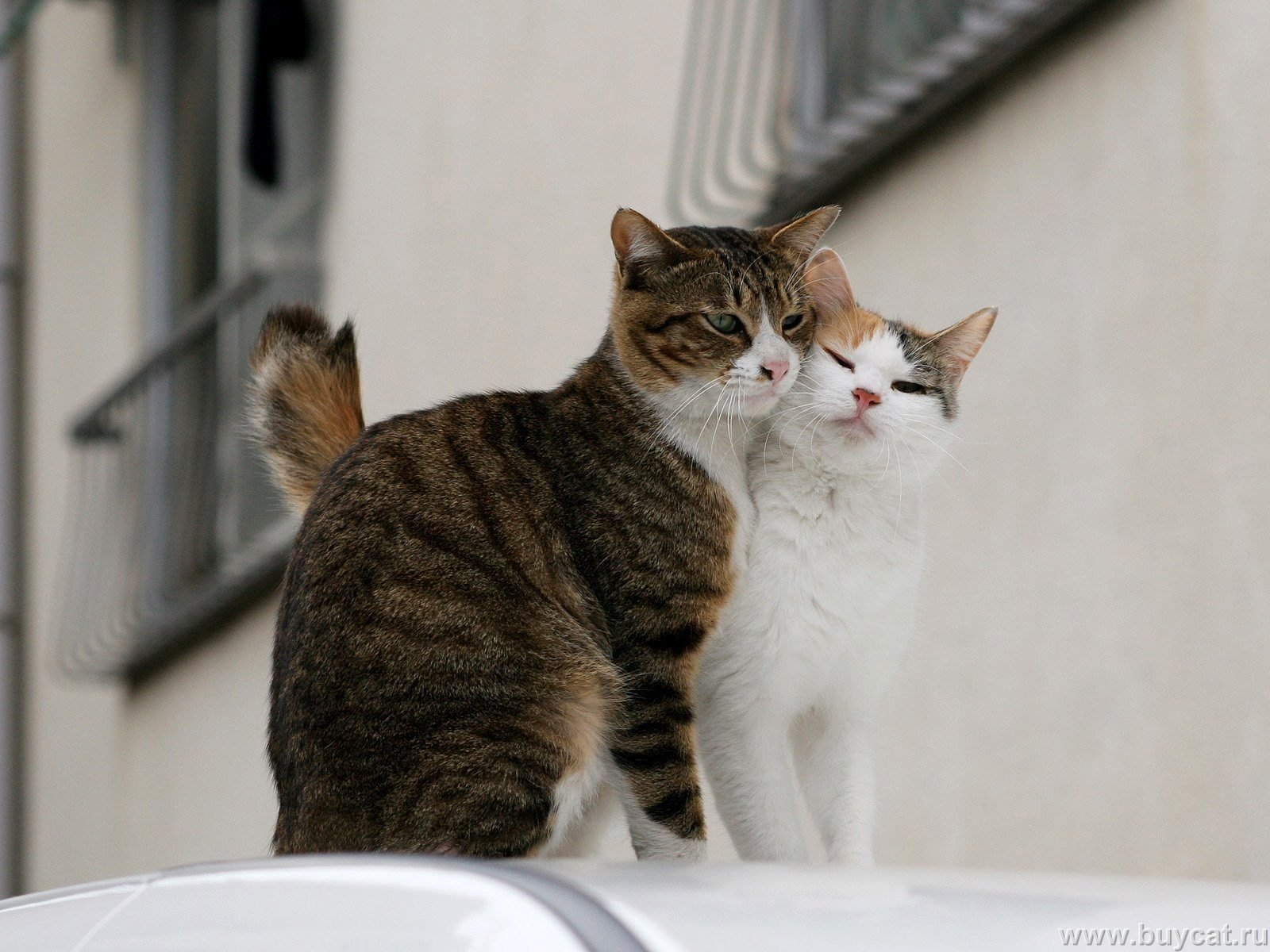 hilarious cats - photo #11
