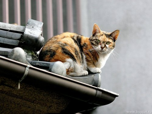 Funny 猫