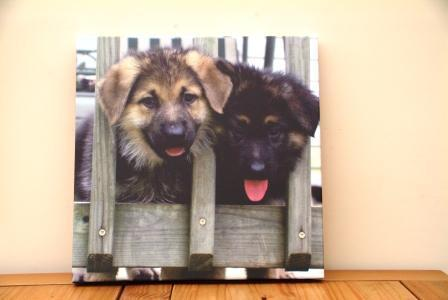German Shepherd पिल्लें On Canvas