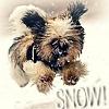 Hunde Foto entitled Let it Snow