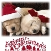 Dogs photo called Merry Xmas