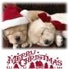 Hunde Foto titled Merry Xmas