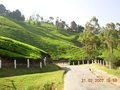 Munnar 1 - photography wallpaper