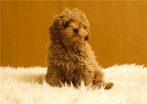 cucciolo Amore ♥