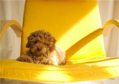 कुत्ते का बच्चा, पिल्ला प्यार ♥