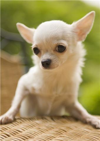 강아지 사랑 ♥