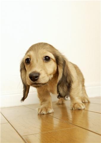 anjing, anak anjing ♥