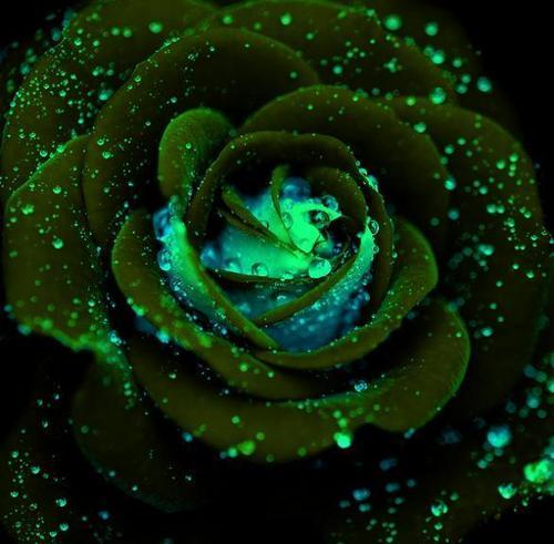इंद्रधनुष फूल