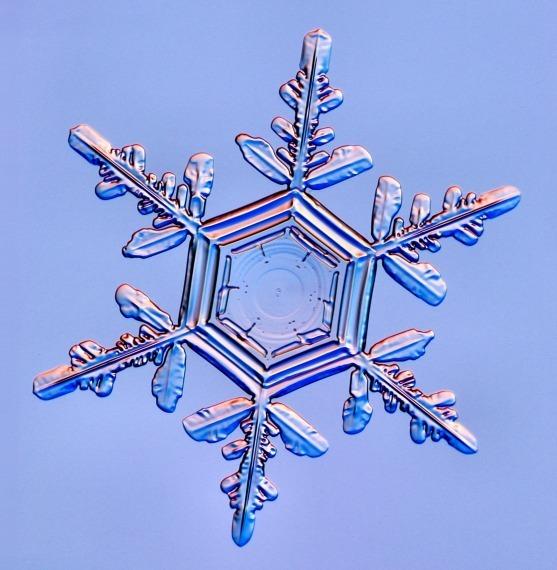 Real Snowflakes! - Christmas Photo (9447501) - Fanpop White Christmas Tree Decorations 2014