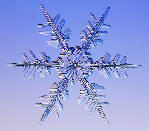 real snowflakes background - photo #37