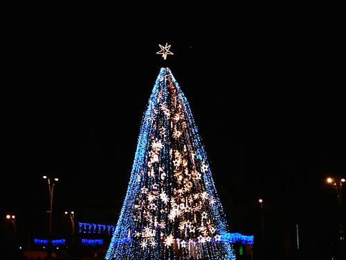 cây of Lights