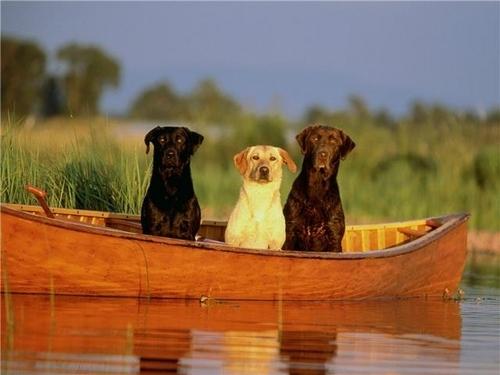 We ♥ anjing
