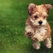 We ♥ Dogs - dogs icon