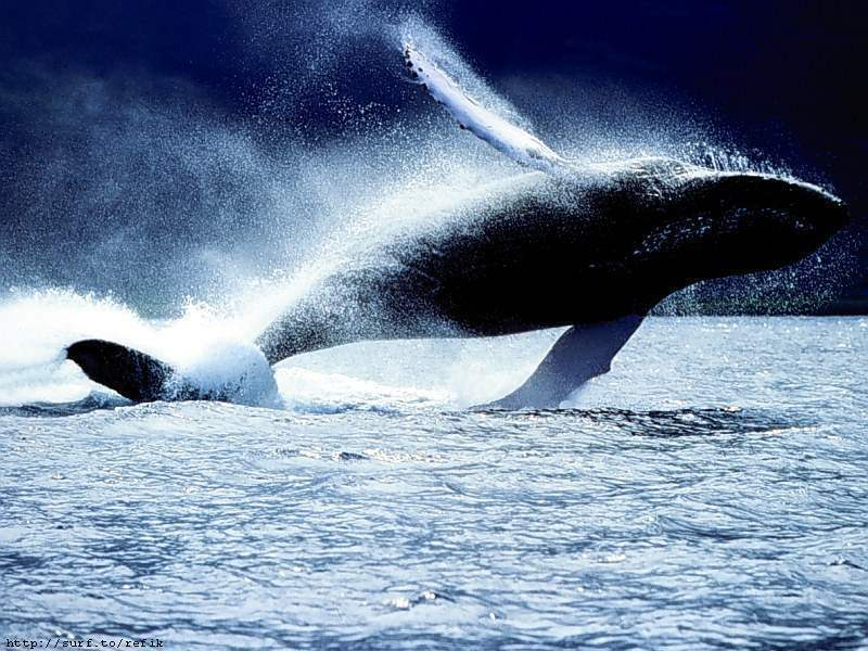Whale wallpaper - photo#22