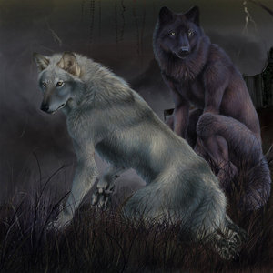 Wolves and werewolves