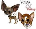 Yoda & Daisy - chihuahuas fan art