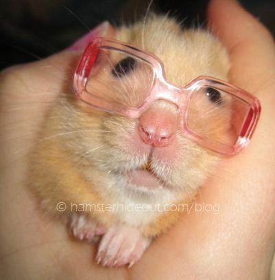 lol hamster