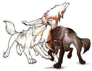 3 animé loups