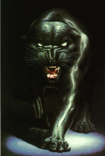 Black panter, panther Fanart