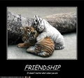 Friendship has no Differences