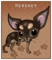 Hershey - chihuahuas fan art