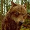 Jacob Black photo entitled Jacob (Wolf form)