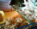 My Hamster (lil cutie) Edward! <3