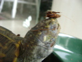 My silly turtle - turtles photo